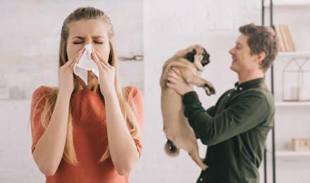 Eine Frau niest während ein Mann im Hintergrund einen Mops in der Hand hält