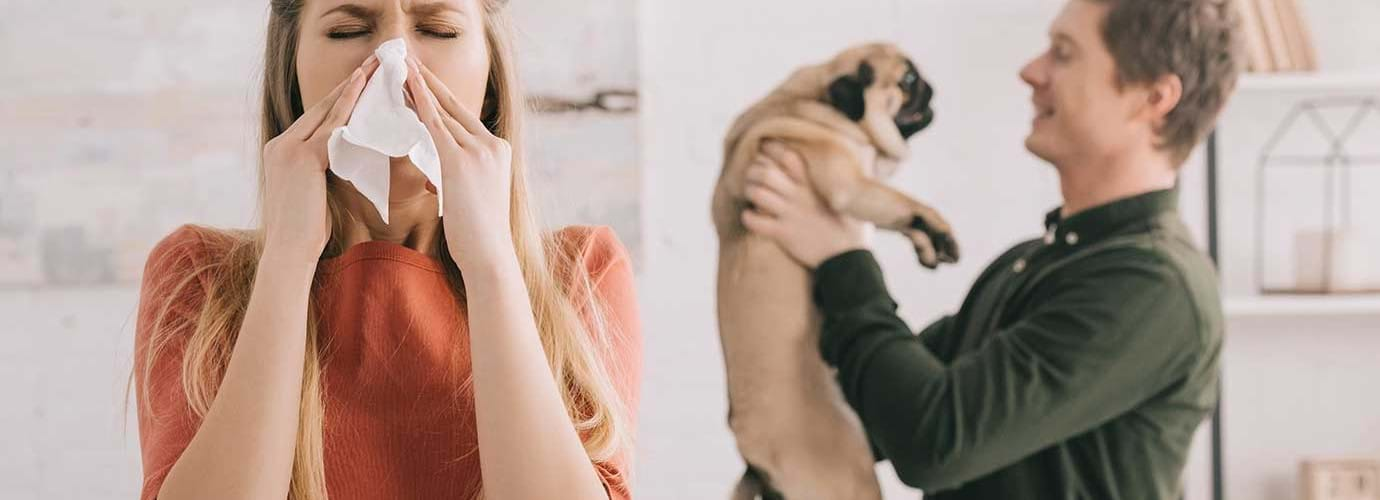 Vrouw niest terwijl een man in de achtergrond een mopshond vasthoudt