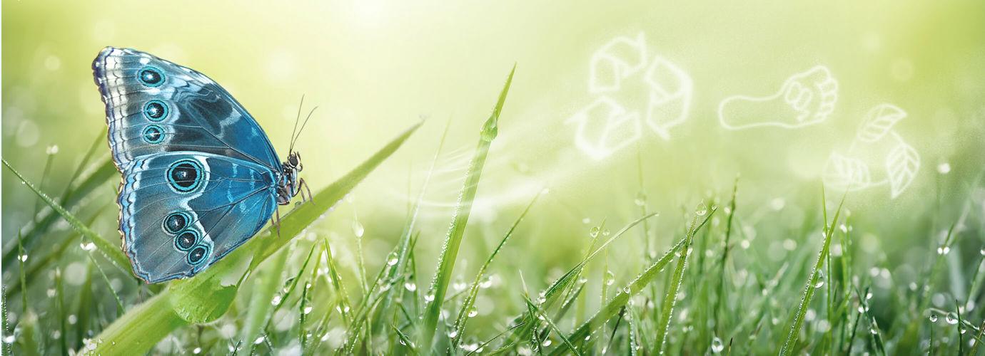 Wir verpflichten uns dazu, unsere Auswirkungen auf die Umwelt zu reduzieren